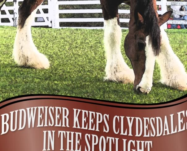 Clydesdale ebook on Amazon